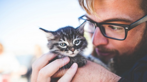 A man wearing glasses holding a kitten close to his face.